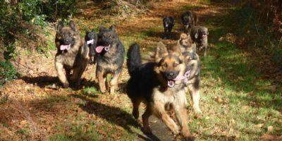 Educateur canin cours d'éducation canine dressage chien à domicile - conseil eduquer son chien