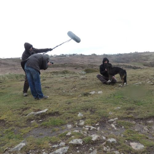 Chien_tournage_film_bretagne