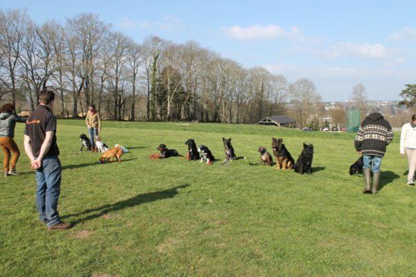 cours_collectif_entre_hommes_et_chiens
