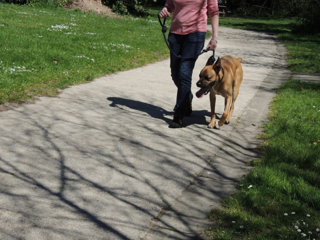 Educateur canin - cours d'éducation canine - dressage
