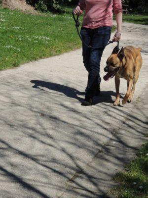 Educateur canin éducation canine dressage chien -conseil eduquer son chien