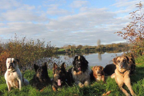 Educateur canin – éducation canine – dressage chien à Quimper Finistère
