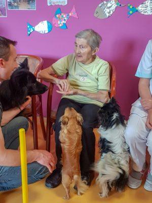 Zoothérapie et médiation animale 29 en Bretagne