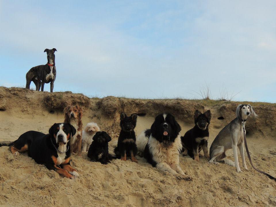 Educateur canin - Comportementaliste canin - Dressage de chien