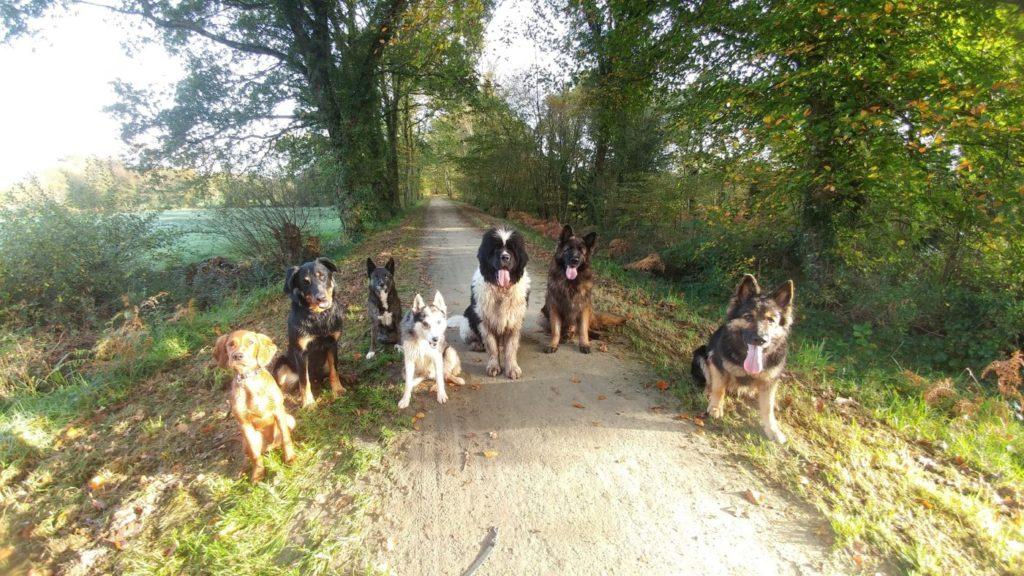 Pension éducative pour chien en Bretagne