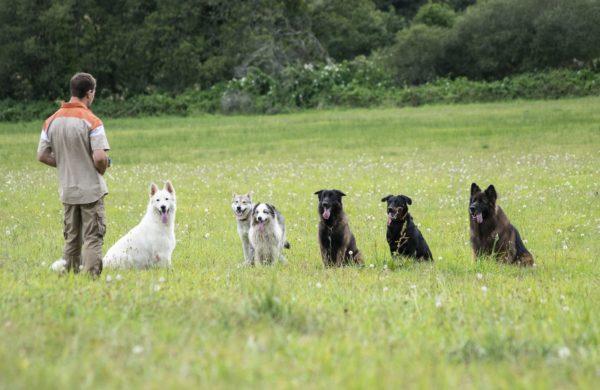 Educateur canin - Comportementaliste canin - Dressage de chien Quimper Finistere Bretagne