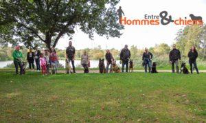 Promenade éducative canine, promenade collective, lâché de chien et éducation en groupe dans le Finistère 29 Quimper Pont l'abbé Concarneau.